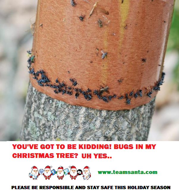 """Destructive Invasive Pest"" Christmas Tree Farms in Five States Being Bugged by the Spotted Lanternfly"