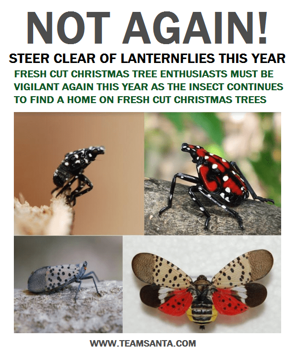 Dangerous Crop Destroying Lanternfly Has Now Spread to Seven N.J. Counties. Kill It If You See It